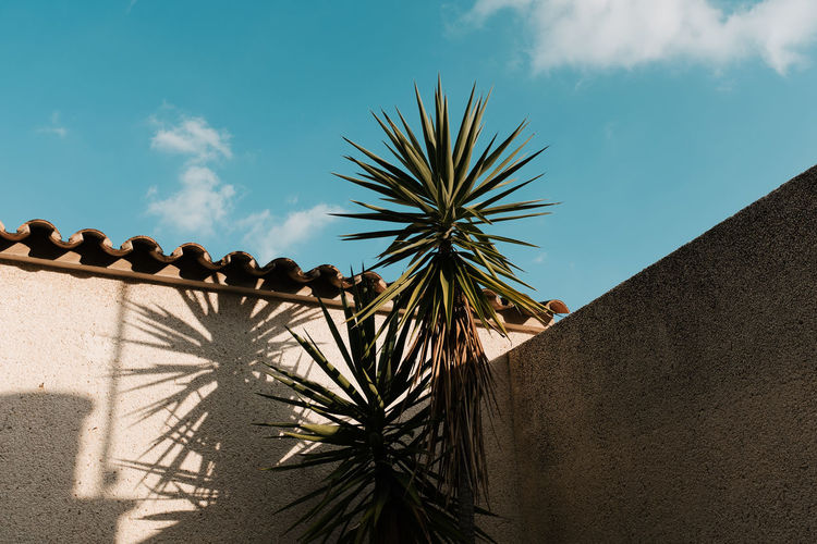 Low Angle View Of Palm Trees By House Against Sky