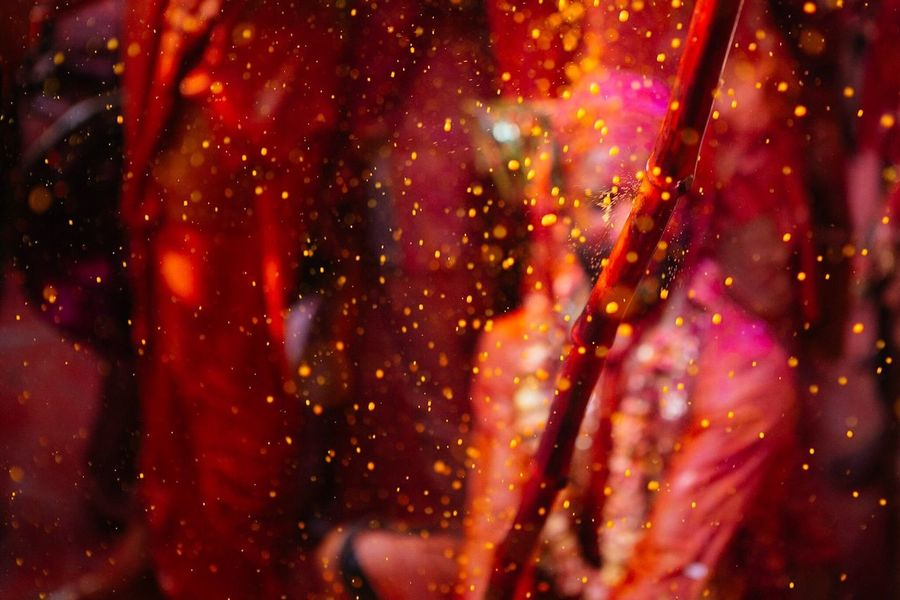 Raining Colors People Holi Festival Colors Colorful Travel Nandgaon Vrindavan Bokeh Outdoors Celebration Red India Rangbarse Place Of Worship The Photojournalist - 2017 EyeEm Awards