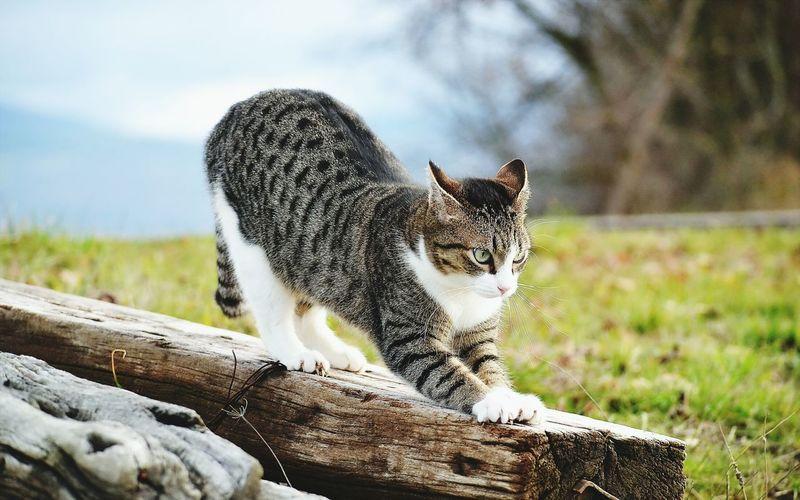 Cat Catlovers Cats Kedi Antalya