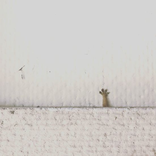 The lizard under the gypsum extending the left leg to one side. EyeEm Selects Wall - Building Feature Animal Themes Animal One Animal No People Invertebrate Vertebrate Copy Space Close-up White Color Wall