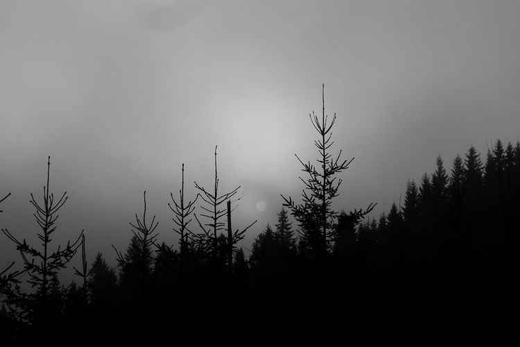 Silhouette of trees against sky