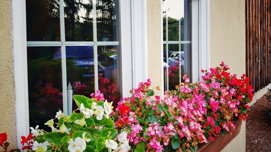 Close-up of flowers blooming against window