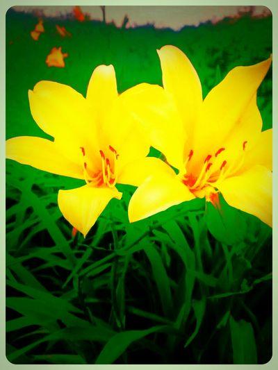 Good Morning!!!!Nature Flowers Winter EyeEm