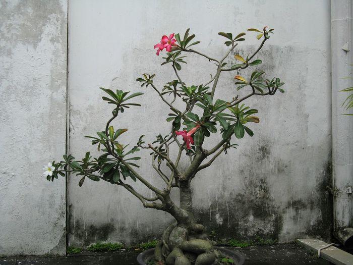 Java, Indonesia Flowers, Unedited Photo