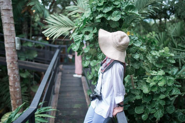 Hat Plant