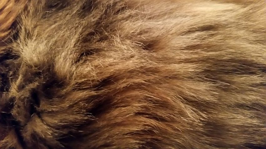 Detail: cat fur. Fluffy tortoiseshell/calico kitty. Animal Themes Full Frame Mammal One Animal Close-up Animal Hair Animals In The Wild Domestic Animals Animal Wildlife Backgrounds Nature Fur Furry Fluffy Fluff Fuzzy FUZZ Texture