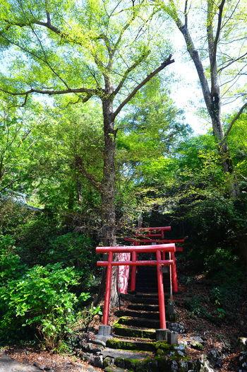 Gazebo by trees in forest