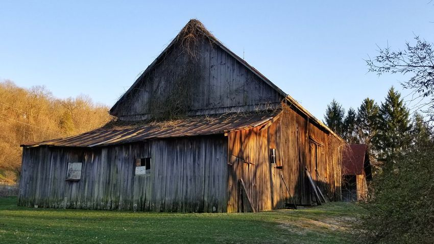 Barns in Ohio Golden Hour Rural America Barn Built Structure Architecture Building Exterior Hut House Wood - Material Outdoors Day No People Sky Grass Roof