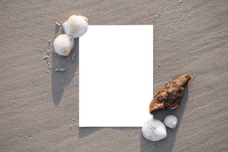 Directly Above Shot Of Blank Paper With Seashells On Sand At Beach
