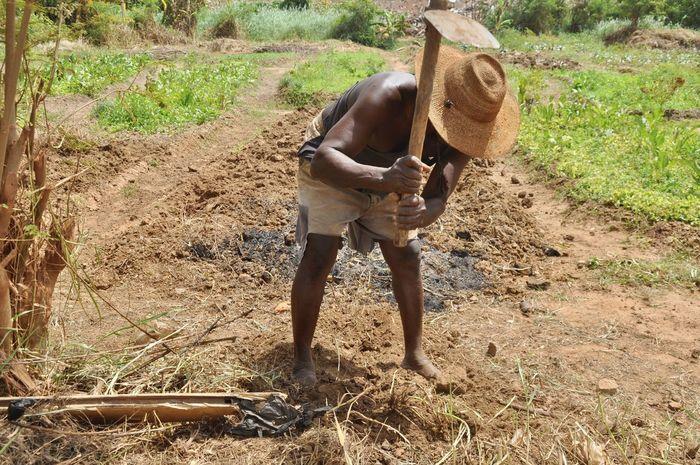 Africa Farm Farmer Farmer's Life Farming Field Field Work Ghana Hat Heat Mali Man At Work Nigeria Tropical Tropical Climate West Africa Working Working Hard
