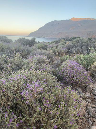Plant Scenics -