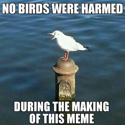 Shoutingbird ShoutOut Lawlpicsig Laugh lol joke meme wacky bird water animal funny funnypictures instafun instagram instahappy lmfao