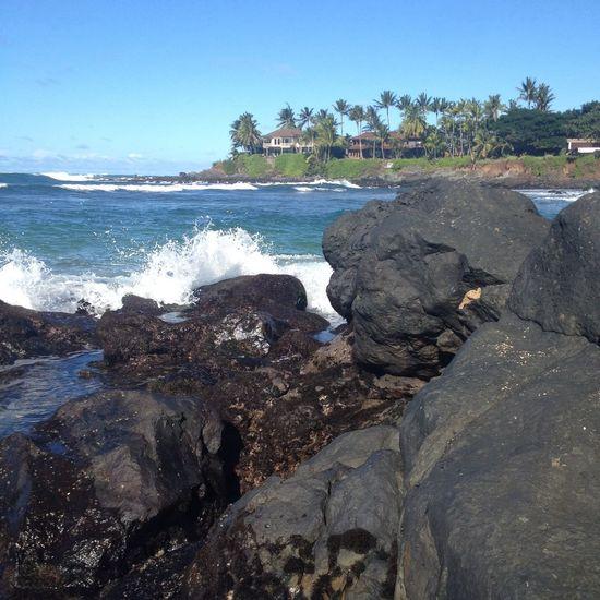 Hawaii Hanging Out Nature Enjoying Life