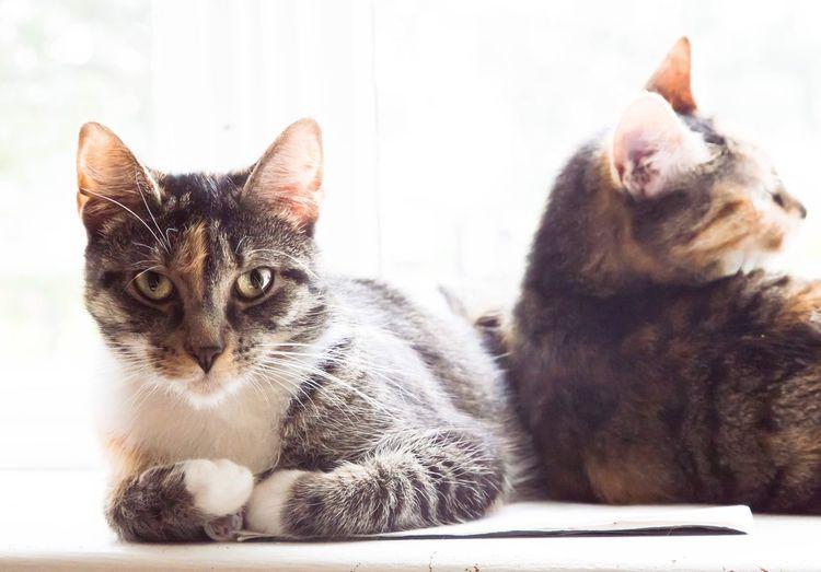 Close-up portrait of kitten sitting