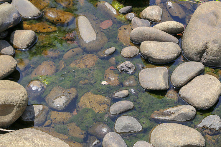 Rock Solid Stone - Object Water Rock - Object Pebble Nature Shallow Sunlight Tranquility No People Transparent Stone High Angle View Day Outdoors Lake Land Backgrounds Pollution Purity Clean