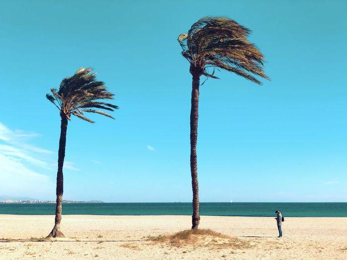 Coconut palm trees on beach against blue sky