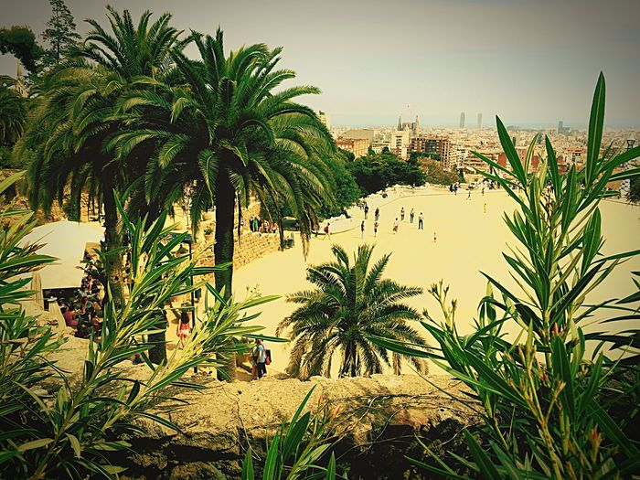 Vegetation Parcguell Barcelona Plaza View Holidays
