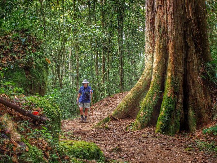 Woman walking along forest path