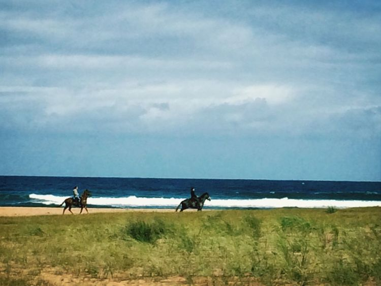 Horses in Rodiles Beach⚓️ Beach Nature Nature_collection Asturias