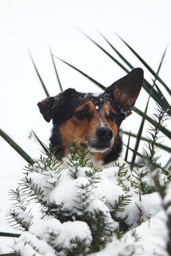 snowy pup Pets