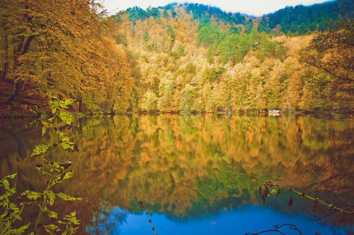 Landscape view of a lake in autumn season with orange and yellow trees around. Lake View Lake Lakescape None No People Silent Landscape Yellow Turkey Forest Color Yedigoller Amazing View Amazing_captures Wide Angle Wide Shot EyeEm Selects Water Reflection Nature Scenics Outdoors No People Lake Tree Beauty In Nature Plant Landscape Mountain Sky Day