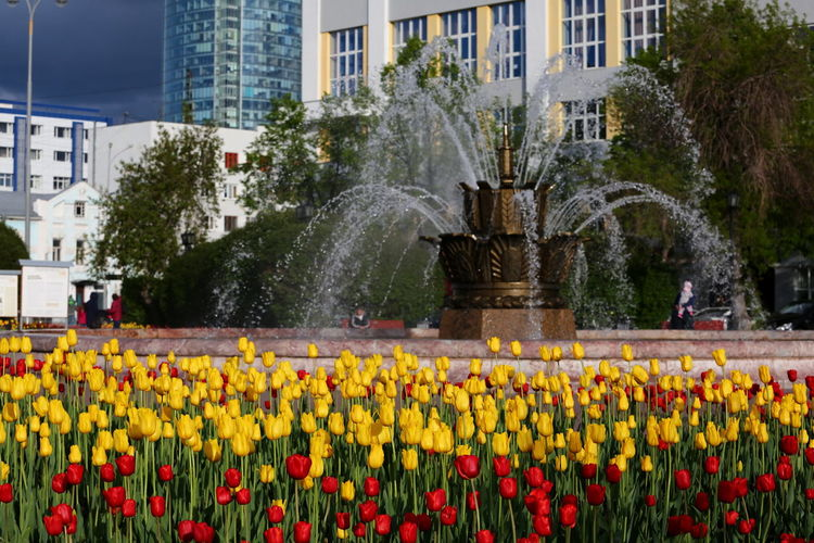 Yellow Yellow Flower City View  Citylife Fountains Stone Flower Bright Colorful Colors Red Flowers Red Tulips Yellow Flowers Flowers Tulips CityWalk City Life Summertime Yekaterinburg Sunlight City Flower Water Flowerbed Cityscape Skyscraper Fountain Blooming Tulip In Bloom Spraying The Architect - 2018 EyeEm Awards