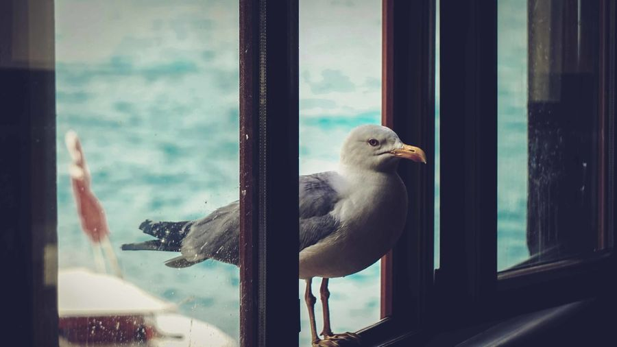 Close-up of bird looking through window
