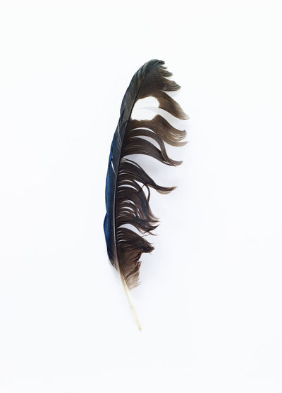 A discarded, scruffy yet beautiful feather. Beauty In Nature Bird Blue Brown Discarded Duck Feather  Flight Ink Natural Nature No People One Preened Scruffy, Single Spot, Tools Unwanted Used Weathered