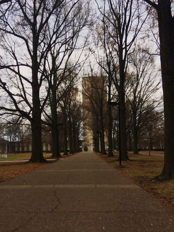 Walks on Campus University Of Kentucky Walkway Fall IPhoneography