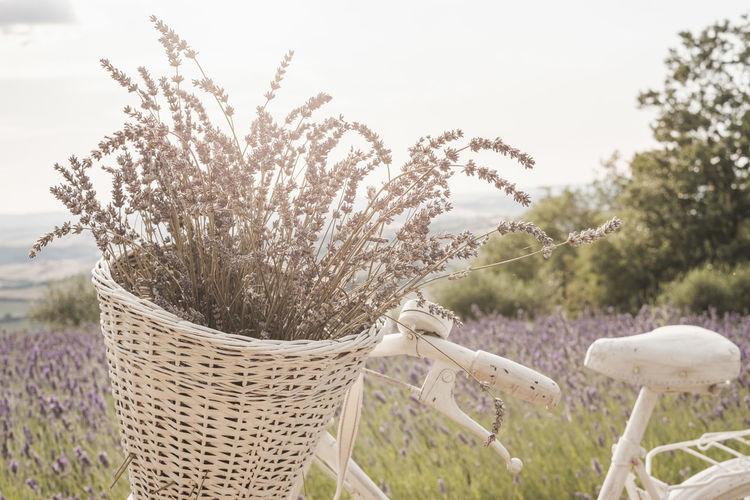 Close-up of flowering plants in basket on field against sky