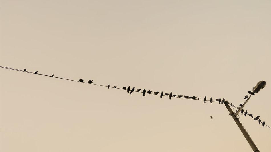 silhouette birds 🐦 Birds_collection Bird Flamingo Flying Flock Of Birds Clear Sky Silhouette Mid-air Telephone Line Animal Themes Sky