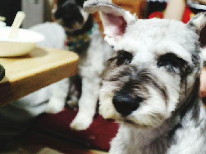 Dog Pets Japan