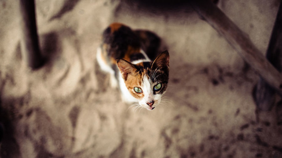Animal Themes Close-up Day Domestic Animals Domestic Cat Feline High Angle View Indoors  Kitten Mammal No People One Animal Pets Portrait Young Animal
