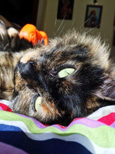 Cat 🐱🐾 First Eyeem Photo