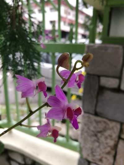Guppyontree Around Home Nature Close-up Flower Flower Head Pink Color Orchid