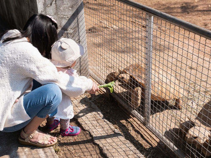 Rear view of woman with daughter feeding tortoise at zoo