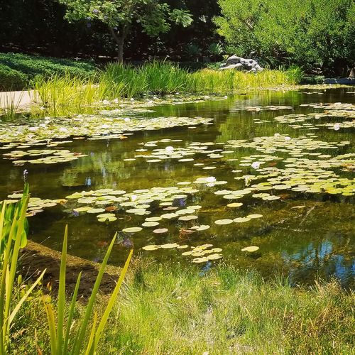 Garden Photography Museum Water Reflections Water_collection
