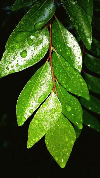 Mint By Motorola Leaf Waterdrops Shot Gs5
