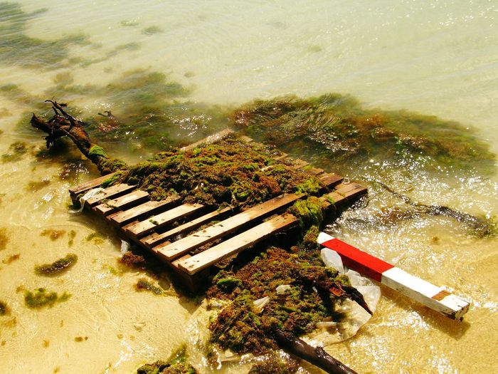Washed up pallet in paradise!!