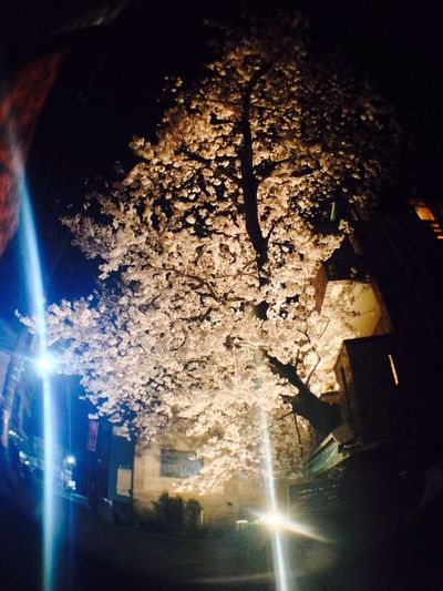 IPhone5 Photo Shoot Cherry Blossoms