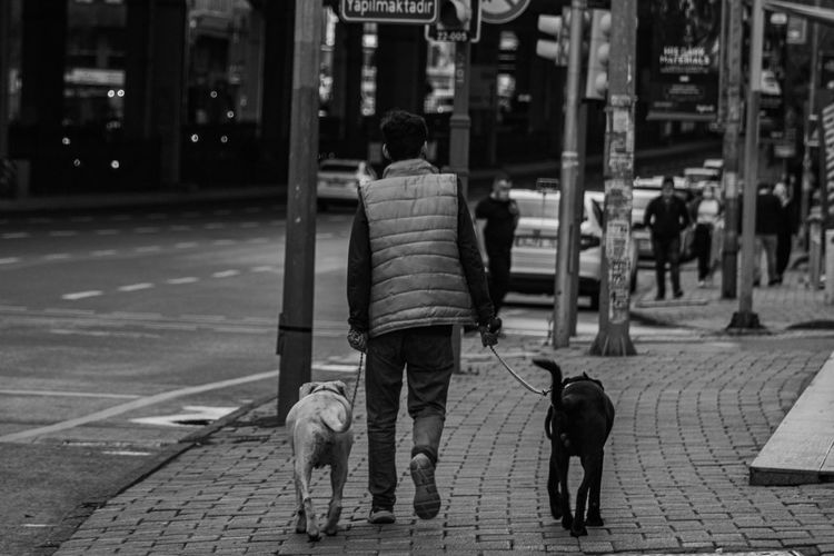 Rear view of dog walking on street in city