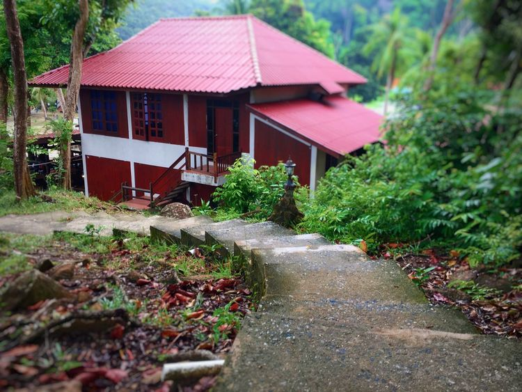 Pulau Redang, Terengganu, Malaysia Terengganu, Malaysia Architecture Building Exterior Built Structure Day Mammal Nature No People Outdoors Plant Pulau Redang Terengganu Tree Vacation Water