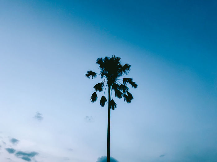 Low angle view of silhouette palm tree against clear blue sky