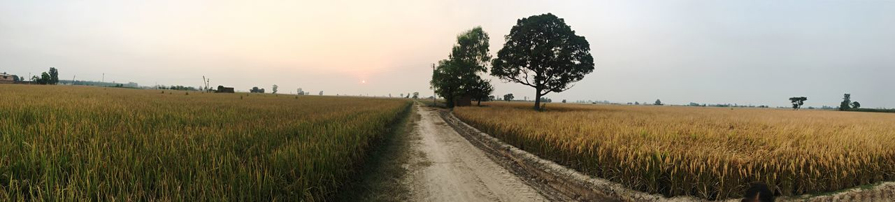 EyeEm Selects fields Grass Field Sky The Way Forward Nature Landscape Tranquil Scene Growth Beauty In Nature Scenics Tranquility Panoramic Outdoors Rural Scene Agriculture Tree Day Road Sunset No People Punjab Daun Kalan India Village Perspectives On Nature