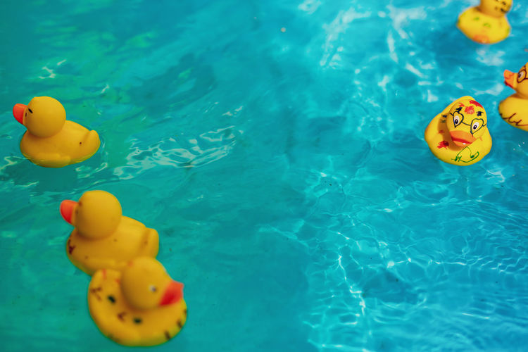 High angle view of rubber ducks in swimming pool