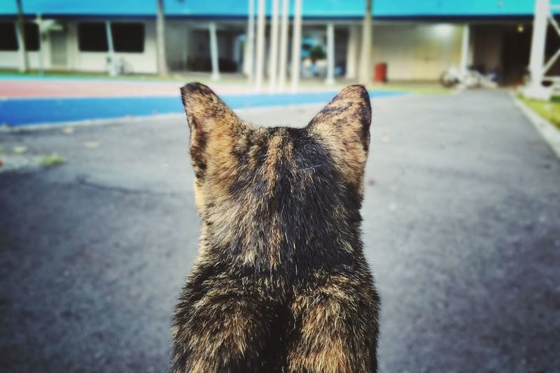 Showcase April Cat Animals Stray Cat Back Meow Singapore Look Looking Streetphotography Up Close Street Photography Fine Art Photography