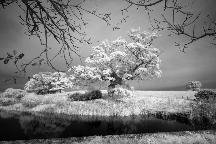 Infrared image of trees growing on field by river against sky