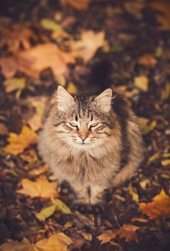 High angle view of cat on field during autumn