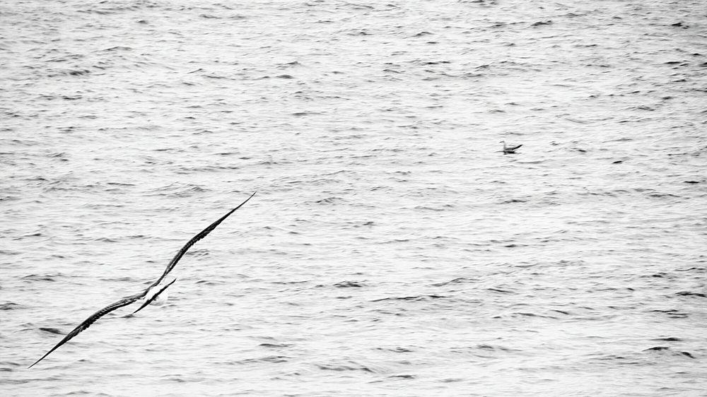 Flying Seagull.. Flying Seagull Seagull. Seagulls Taking Photos Taking Photos Taking Pictures