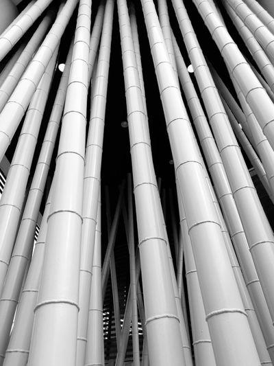 Full frame shot of bamboos